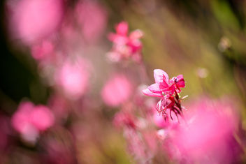 Pink Immersion - image #450125 gratis