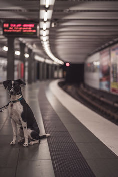 Subway Dog - Free image #450505
