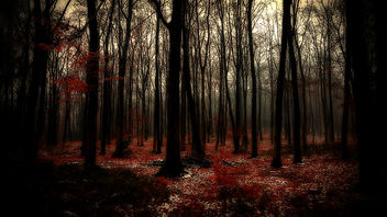 december forest - image #450555 gratis