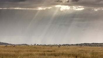 Blades of light on Serengeti - image gratuit #451475