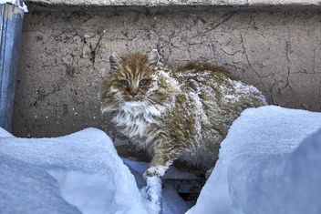 Homeless cat - Free image #451695