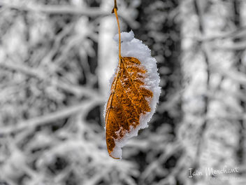 Autumn & Winter Collide - Free image #451755