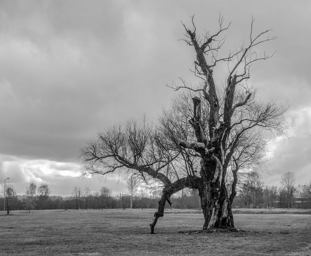 Lonely old tree - image gratuit #452015