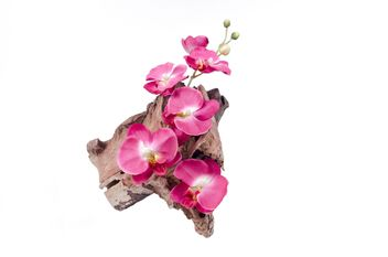 Orchid on wood isolated on white background - image gratuit #452605