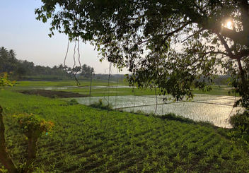 India-Another wonderful view of sunset at Karnataka rice fields - image #452805 gratis