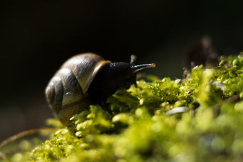 Snail Expedition - image #454055 gratis