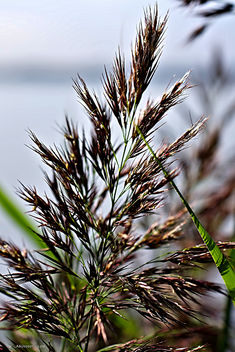 grass on the beach - image #455605 gratis