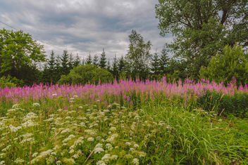 Meadow Of Wild Flowers - image #455715 gratis
