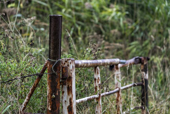 Open fence - HFF - Kostenloses image #455785