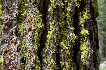 Green moss on tree bark - image #455805 gratis