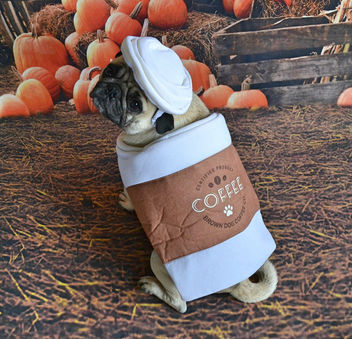 Pumpkin Pug Spiced Latte Anyone? - image gratuit #456825