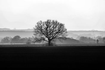 The lonely tree - Free image #456975