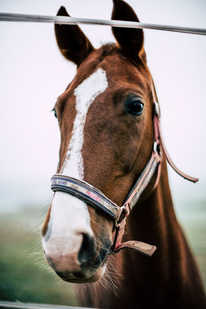 Horse with no name - Free image #457235