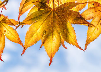 Autumn above - image #457455 gratis