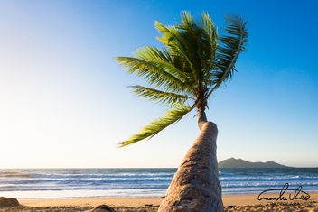 Palm Tree - Mission Beach - Free image #457675