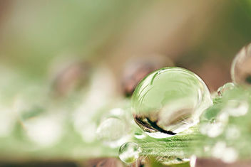 Dewdrop on blade of grass. - image gratuit #458055