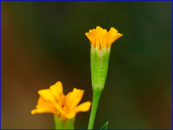 03Feb2019 - yellow flowers - image #458945 gratis