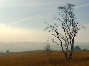 Gentleshaw Common, Burntwood, England - Free image #459445