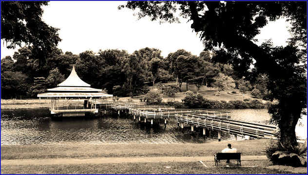 MacRitchie reservoir - the oldest reservoir in Singapore - Free image #459505
