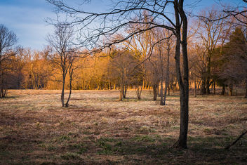 Fox Meadow Illuminated by the Setting Sun - image #459915 gratis