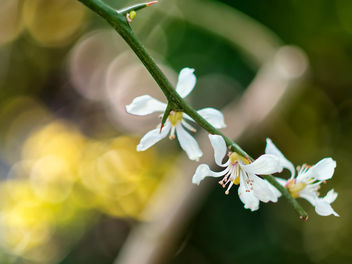 Orange blossom - image gratuit #460045