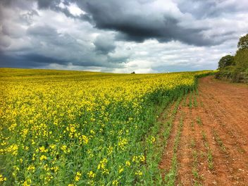 Rapeseeds farms, Burntwood, England - image gratuit #460755