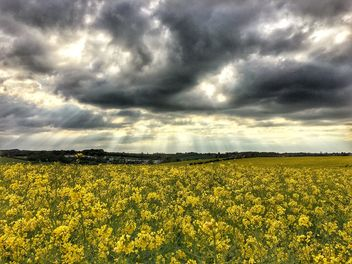 Rapeseeds farms, Burntwood, England - Free image #460785