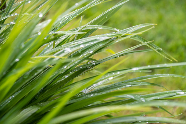 Water droplets on reeds. - Free image #460805