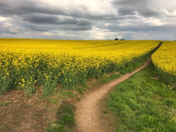 Rapeseeds farms, Burntwood, England - Free image #460855