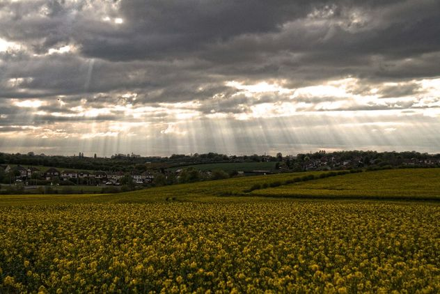 Rapeseeds farms, Burntwood, England - image gratuit #460885