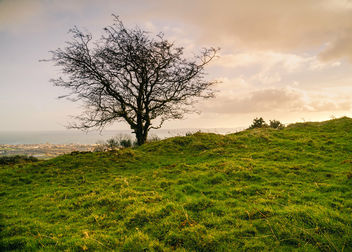 Silhouetted Tree on Knockagh Hill - image #461305 gratis