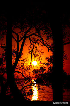 Sunset in between trees by iezalel williams - IMG_8195 - Kostenloses image #461915
