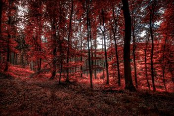 A forest red - image gratuit #462005