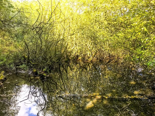 Marsh groves, chase Water, Burntwood - Free image #463645