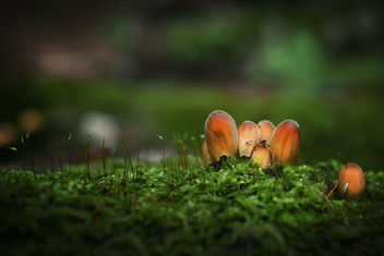 Mushrooms - image #464195 gratis