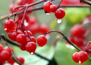Red and drops - image gratuit #464685