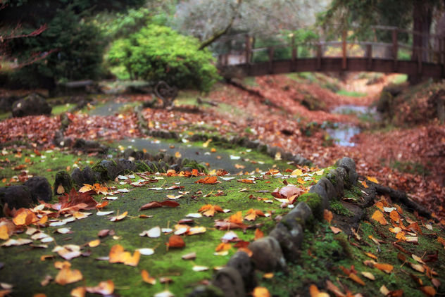 Leaves Have Fallen - Free image #465815