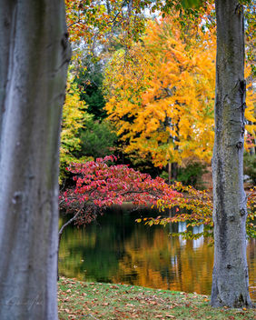 Autumn by the Lake! - image #465845 gratis