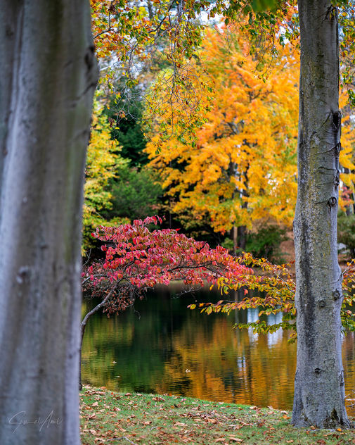 Autumn by the Lake! - Free image #465845