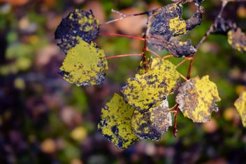 Leaves - image #466315 gratis