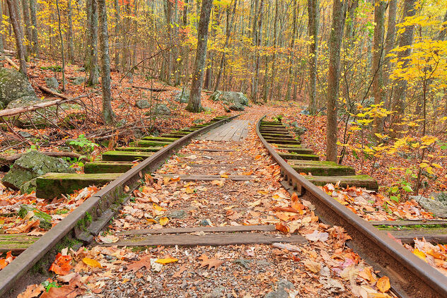 Autumn Logging Railroad - image #468225 gratis