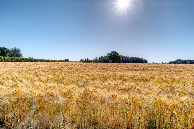 Sea of Barley - Free image #472225