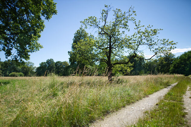 Field. Summer, wide. - Free image #472295
