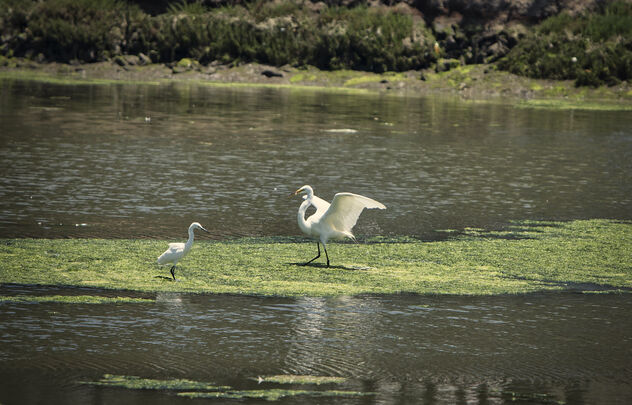 Two birds on algae - image #472855 gratis