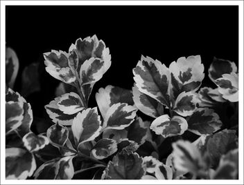 leaves - image #473345 gratis