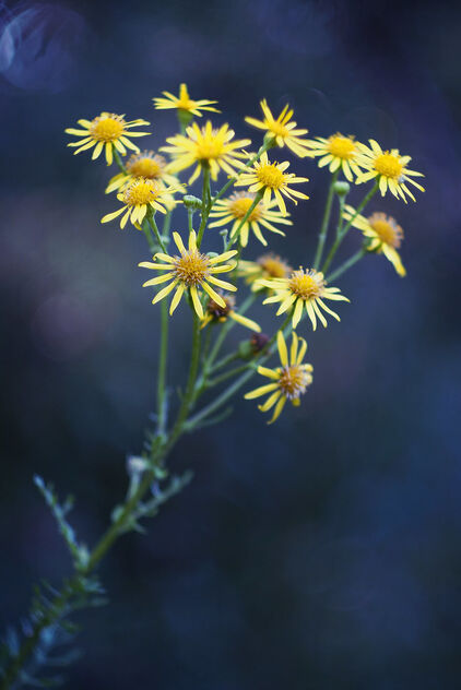 Yellow flowers - image gratuit #474425