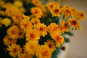 Yellow and orange flowers in the garden. - image gratuit #475745