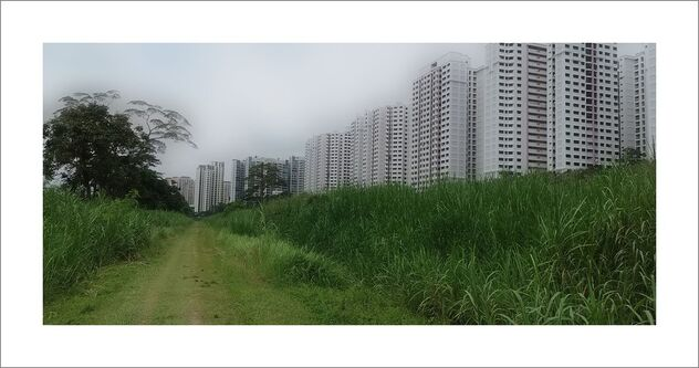 Rail corridor: The old can co-exist with the new (Choa Chu Kang, Yew Tee) - Kostenloses image #479855